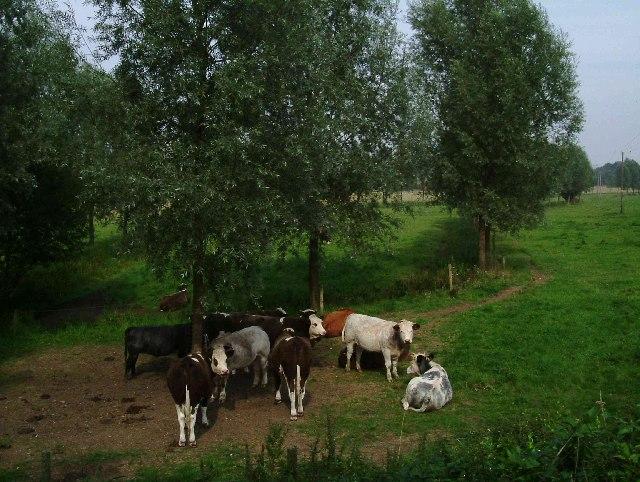 Leez Priory Farm