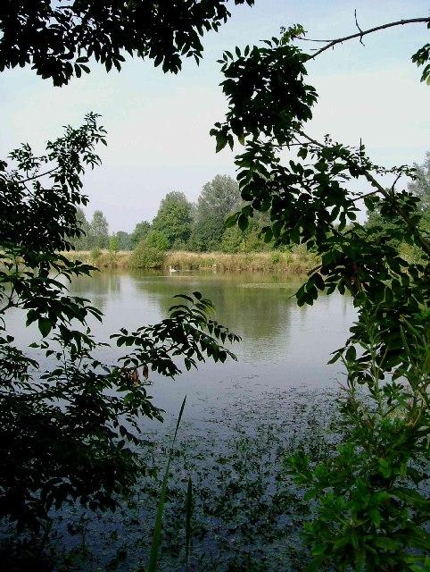 The shady grove Leez Priory